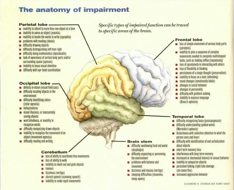 Anatomy of impairment | Brain health | Pinterest | Anatomy, Brain ...