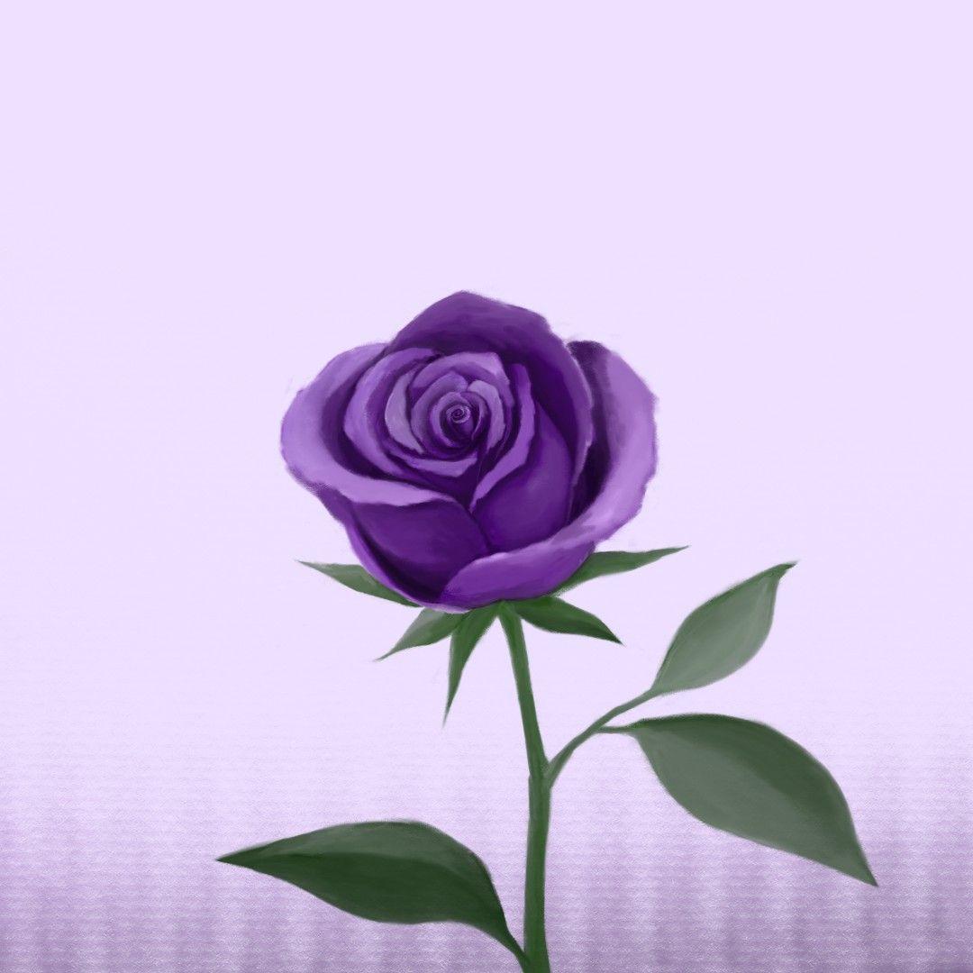 وردة الجوري بنفسجية ٢٠٢٠ Rose Plants Flowers