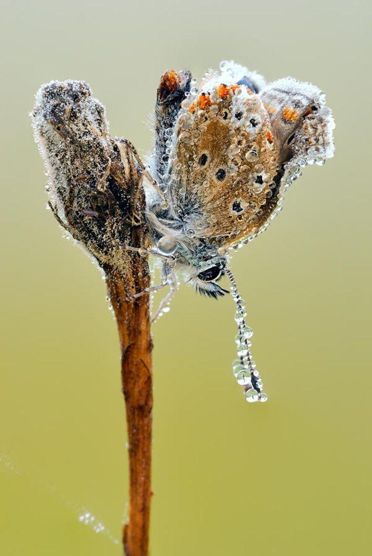 Épinglé par Simone Starinsky sur * ~ Jolies demoiselles & damoiseaux ~ * |  Beaux insectes, Image papillon, Beaux papillons
