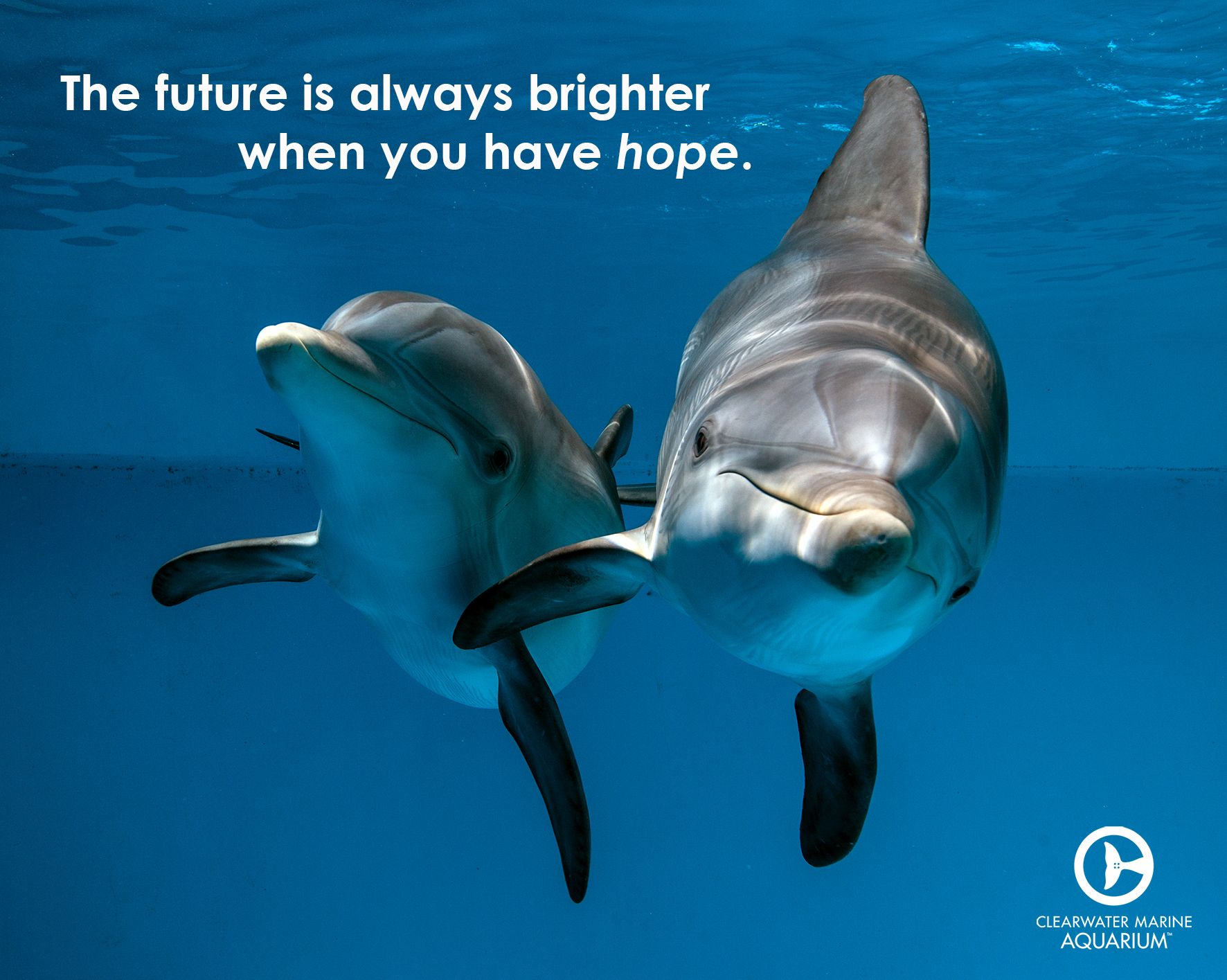 Fish aquarium quotes -  The Future Is Always Brighter When You Have Hope
