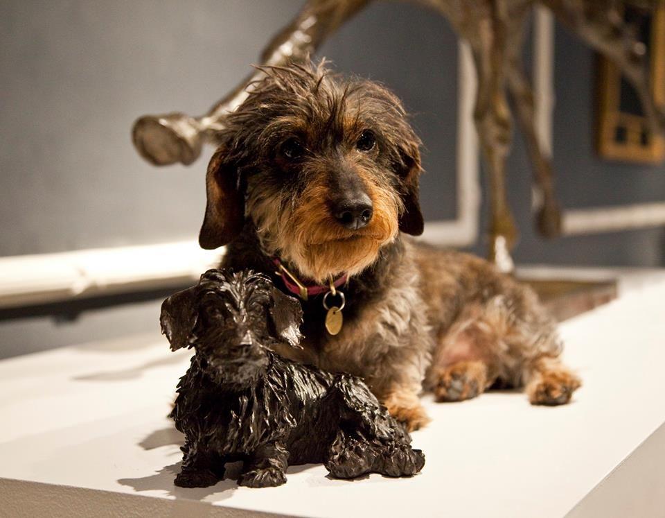 Dog Puppy Dachshund Cute Love Model Fashion Designer