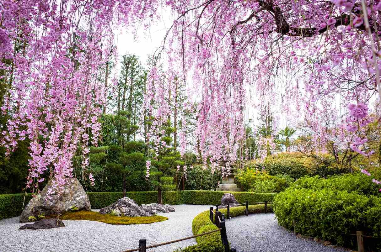 Photo of 9 Japanese Plants for a Zen Garden