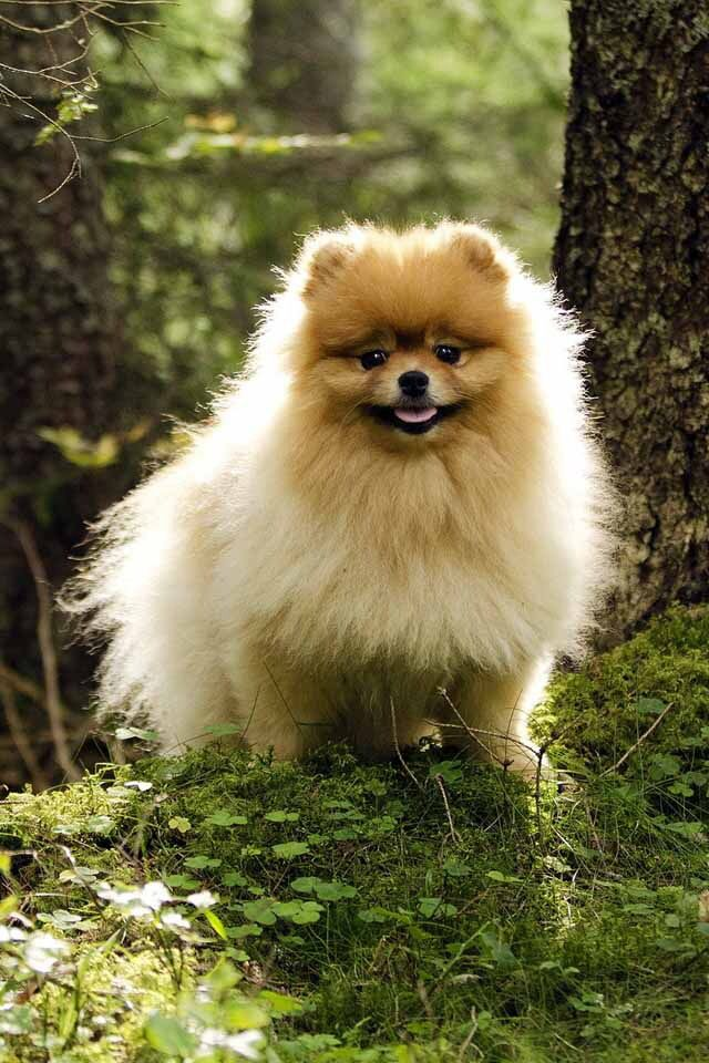 A So Cute Puppy Dog Breed Info Dogs Dog Breeds