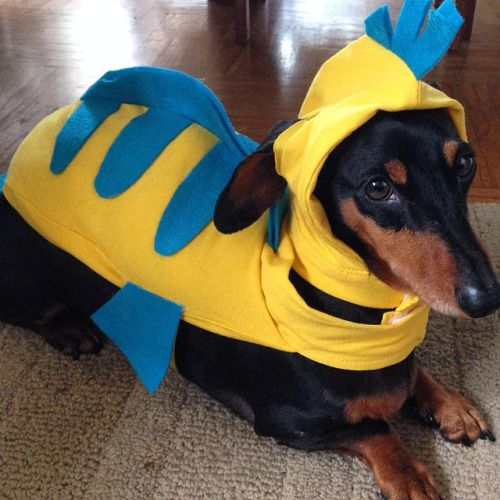 Flounder Dog Costume Google Search Cute Dog Halloween Costumes Dog Halloween Costumes Animal Halloween Costumes