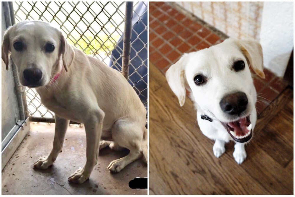 Post Dog daycare, Puppy adoption, Adoption