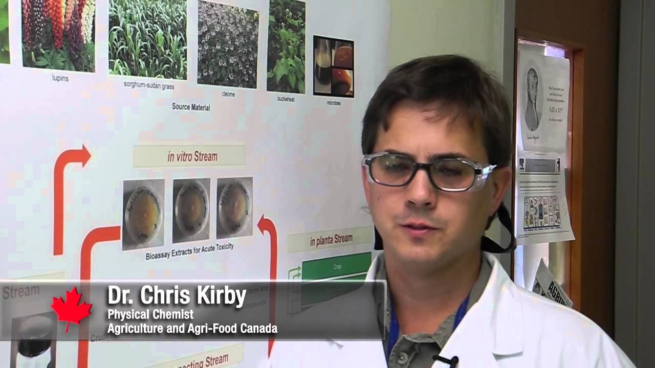 Scientists know that certain plants naturally produce chemicals to protect themselves. Agriculture and Agri-Food Canada research scientist Chris Kirby is loo...