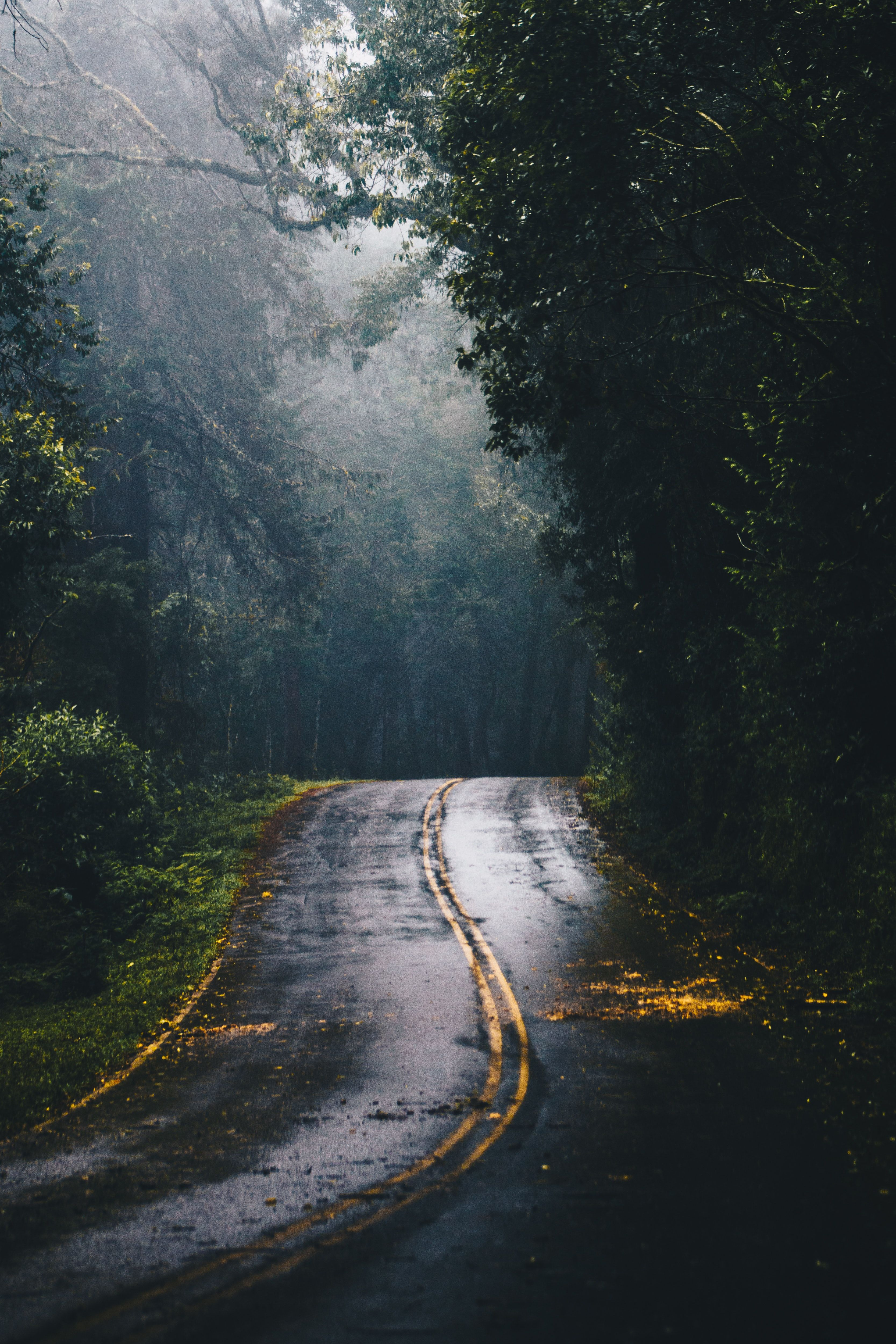20 Beautiful Forest Photos That Will Encourage You To Go Out