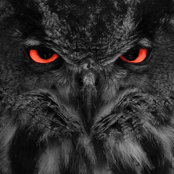 Orange eyes Owl, Owl photos, Owl pictures