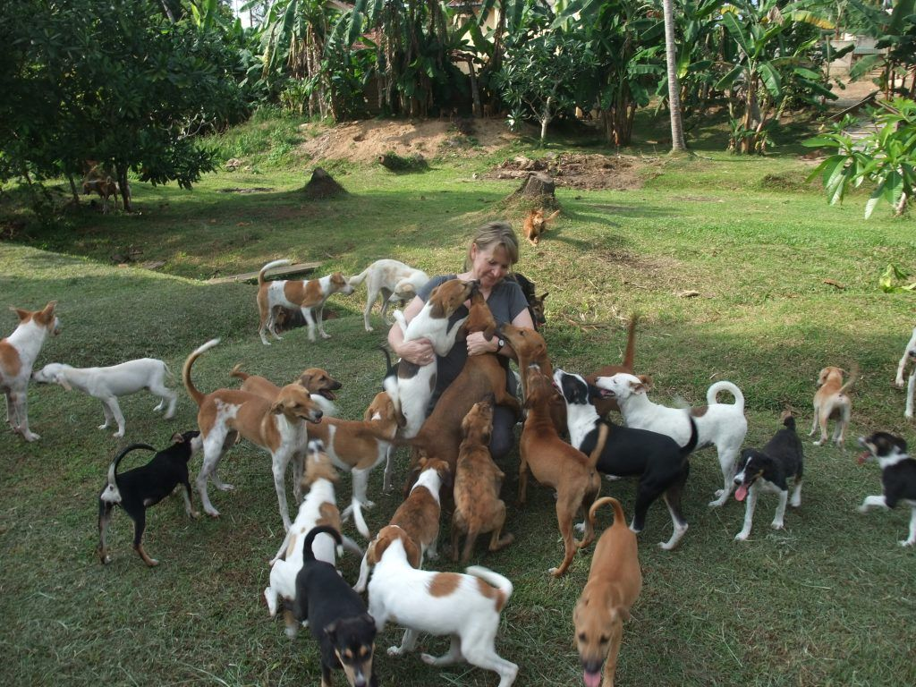 London woman honoured for helping street dogs in Sri Lanka