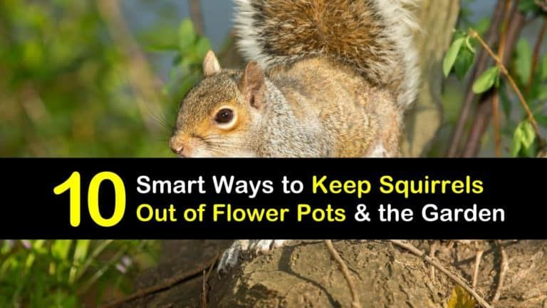 10 smart ways to keep squirrels out of flower pots the