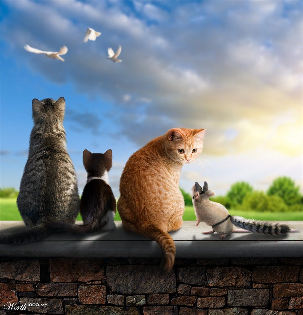 Odd Cat Out by Shorra   1st place entry in Odd Man Out 9