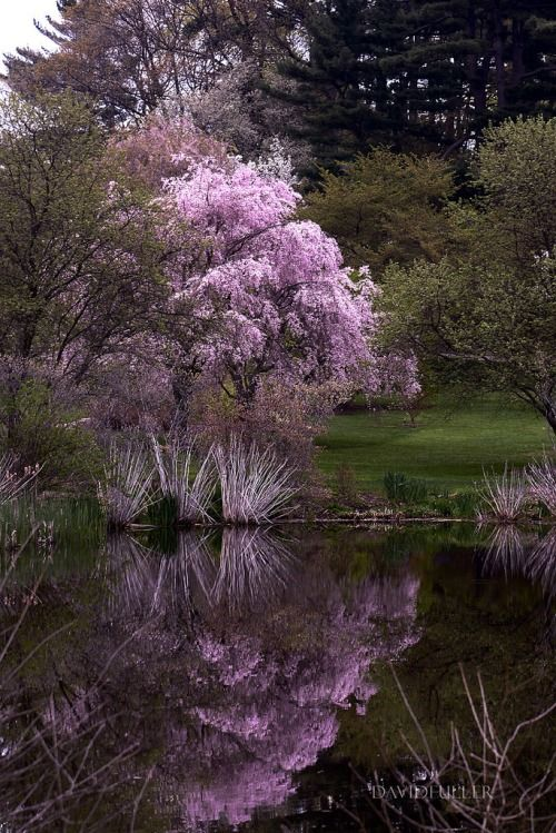 Spring in Boston / Arnold Arboretum / David Fuller Photo (by TheFullerView)