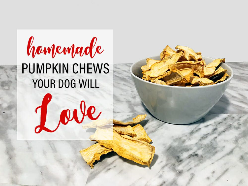 Diy dehydrated pumpkin dog chews with images dog