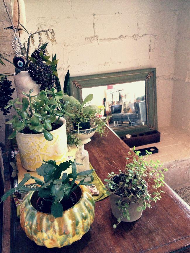Grow little babies   House plants, Plants, Vintage bohemian