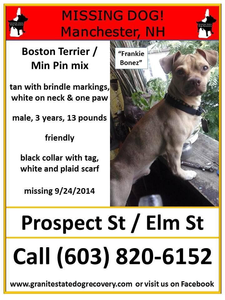 Missing In Manchester Nh Frankie Bonez Is A Male Boston