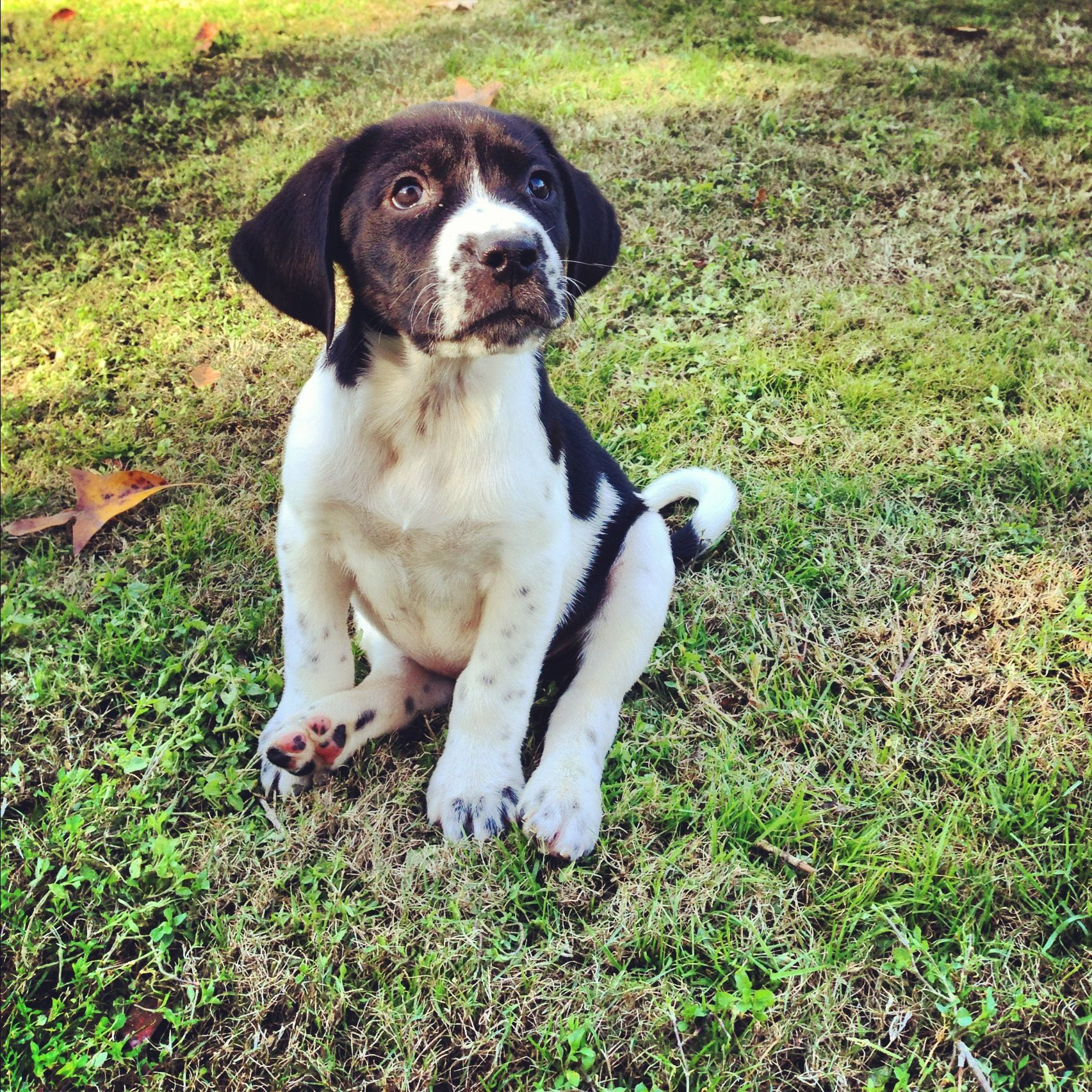 Puppies Dogs Available for Adoption at the