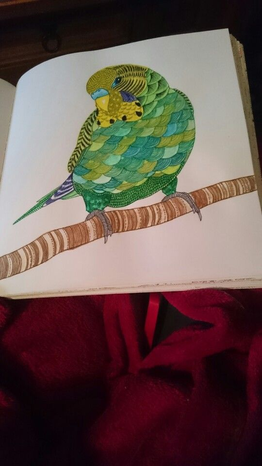 Millie Marotta Animal Kingdom Budgie Ilovetea86