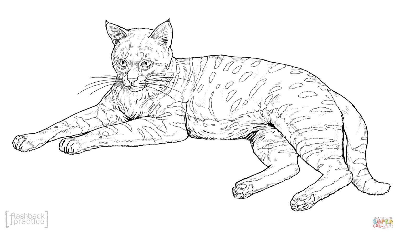 black-footed-cat-coloring-page.png (1518×889) | ART | Pinterest