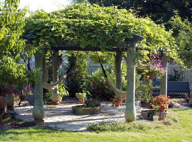 花園涼棚植物