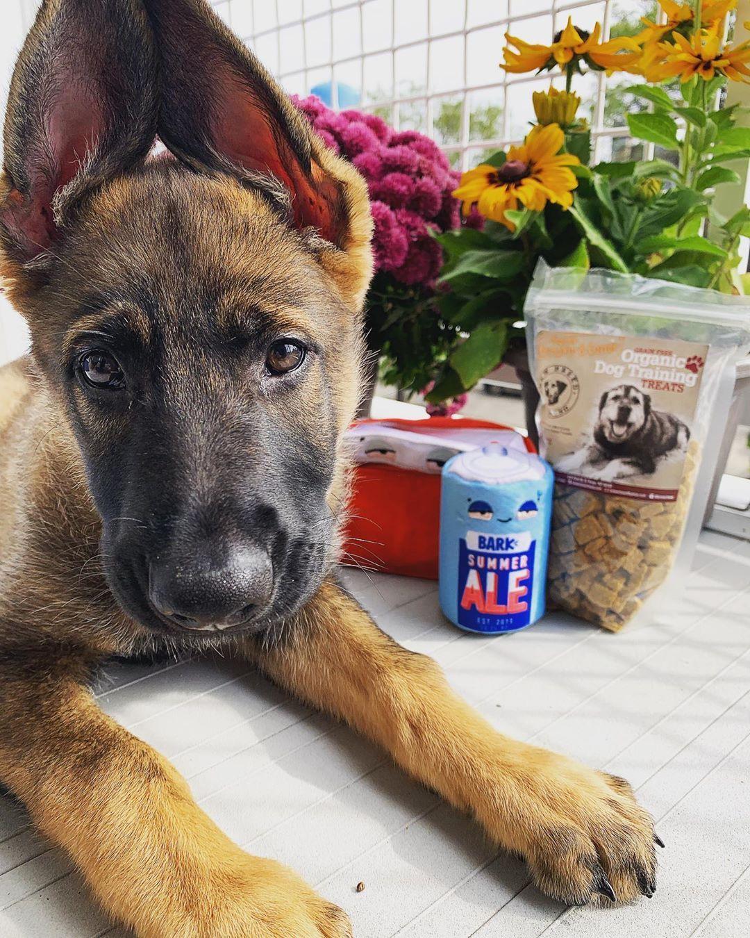 Treat Tossing Dog Camera 2 Way Audio Free Shipping German Shepherd Dog Training Near Me Dog Health Care