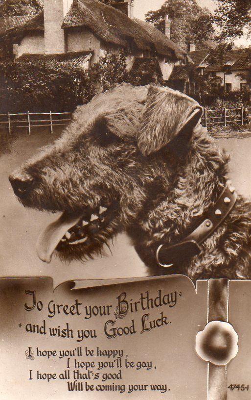 Vintage Birthday Greeting Postcard Of Irish Terrier Lakeland
