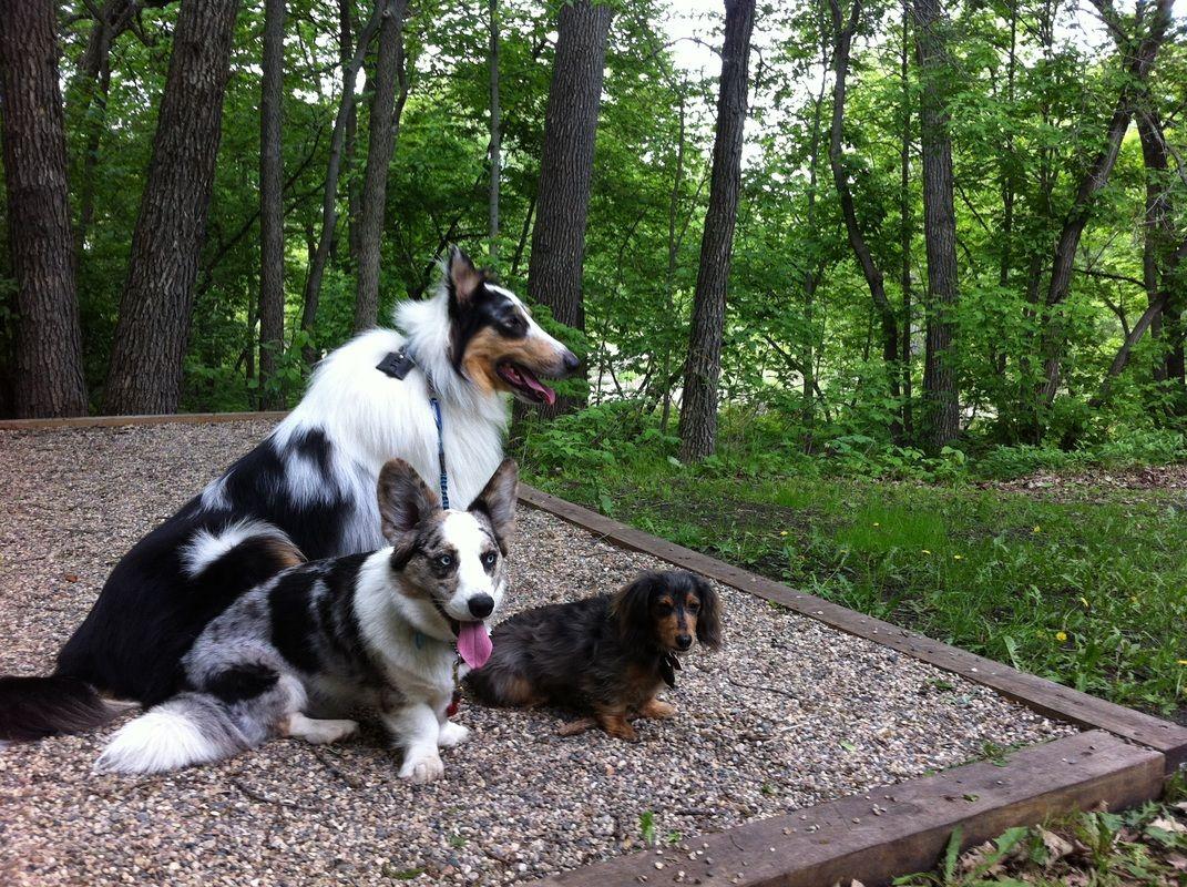 Buffalo River State Park Minnesota Pet Travel Dogs Animals Beautiful