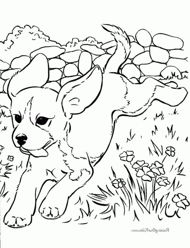 Coolest printable coloring pages of dogs - http://coloring.alifiah ...