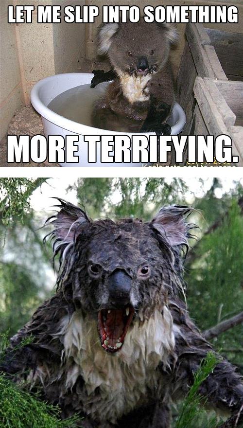 wet koalas kill it kill it with fire lol Animal Drop