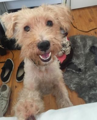 Adopt Kidman On Petfinder In 2020 Poodle Mix Dogs Cat Adoption Best Friends For Life