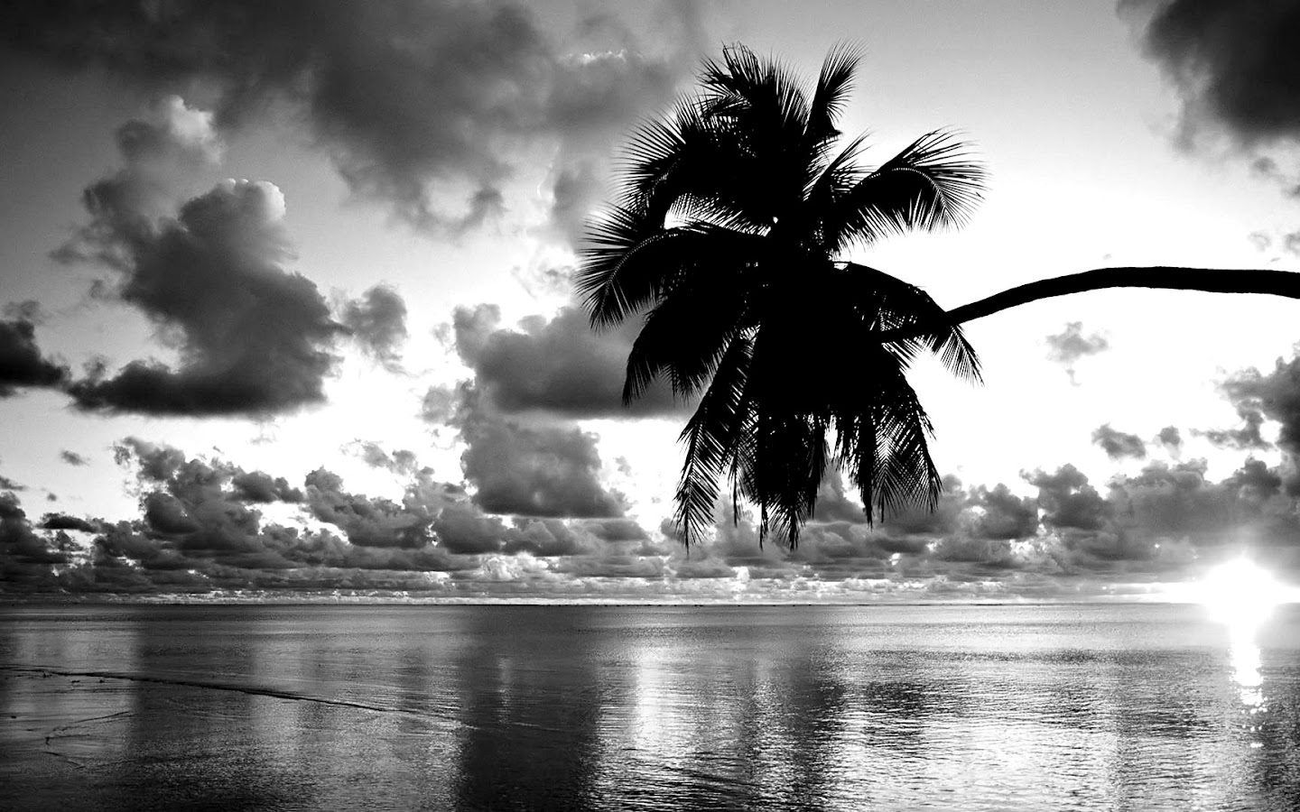 Beach and palm tree black and white wallpaperswebs