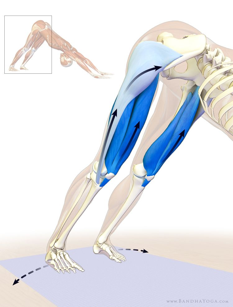 quadriceps and tensor fascia lata in downward dog | Anatomy ...