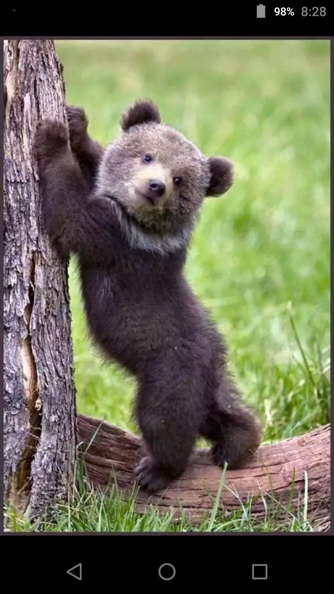 Неуклюжий медведь картинки