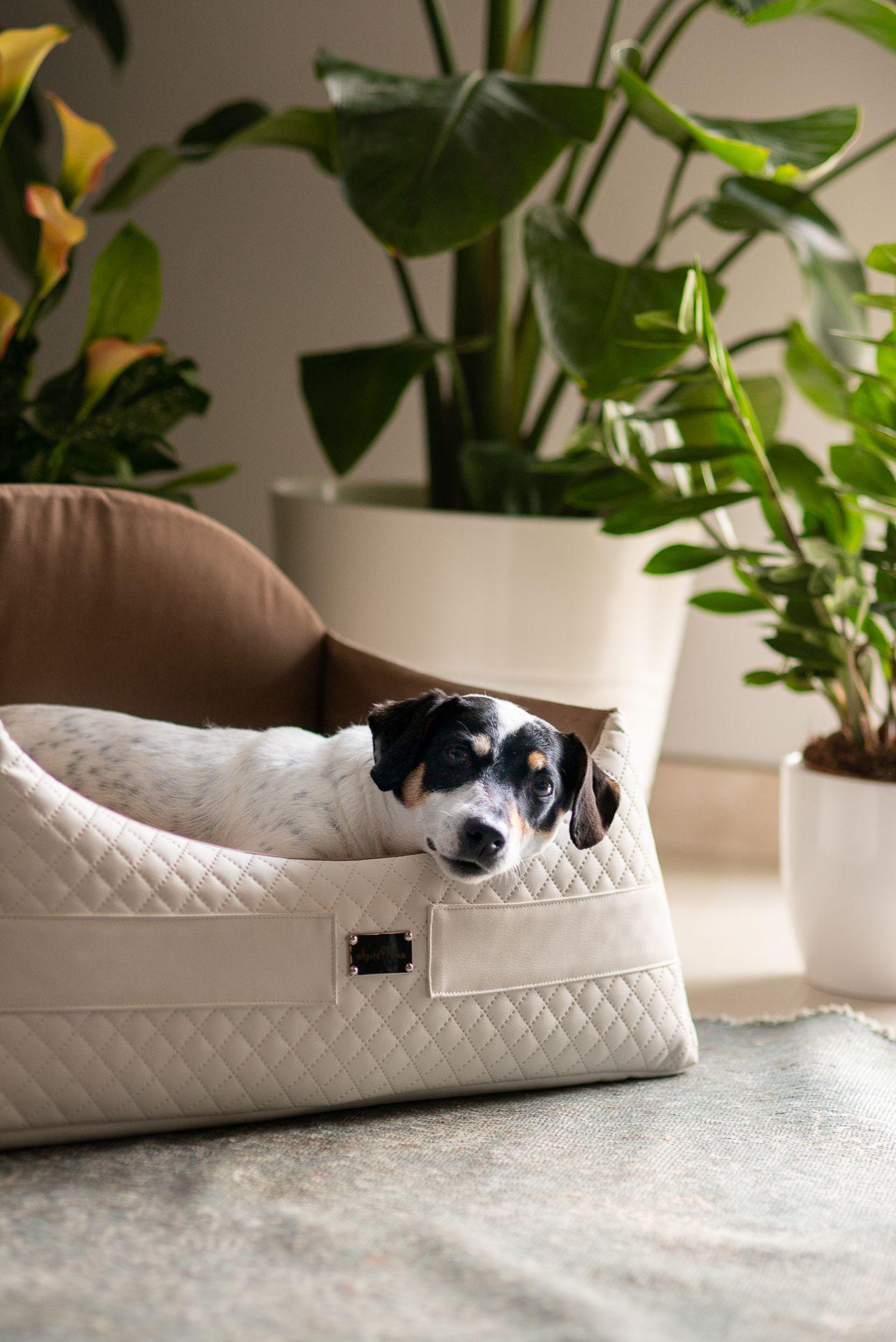 Cucce Design Per Cani cuccia di design per cani domus. perfetta per arredare con