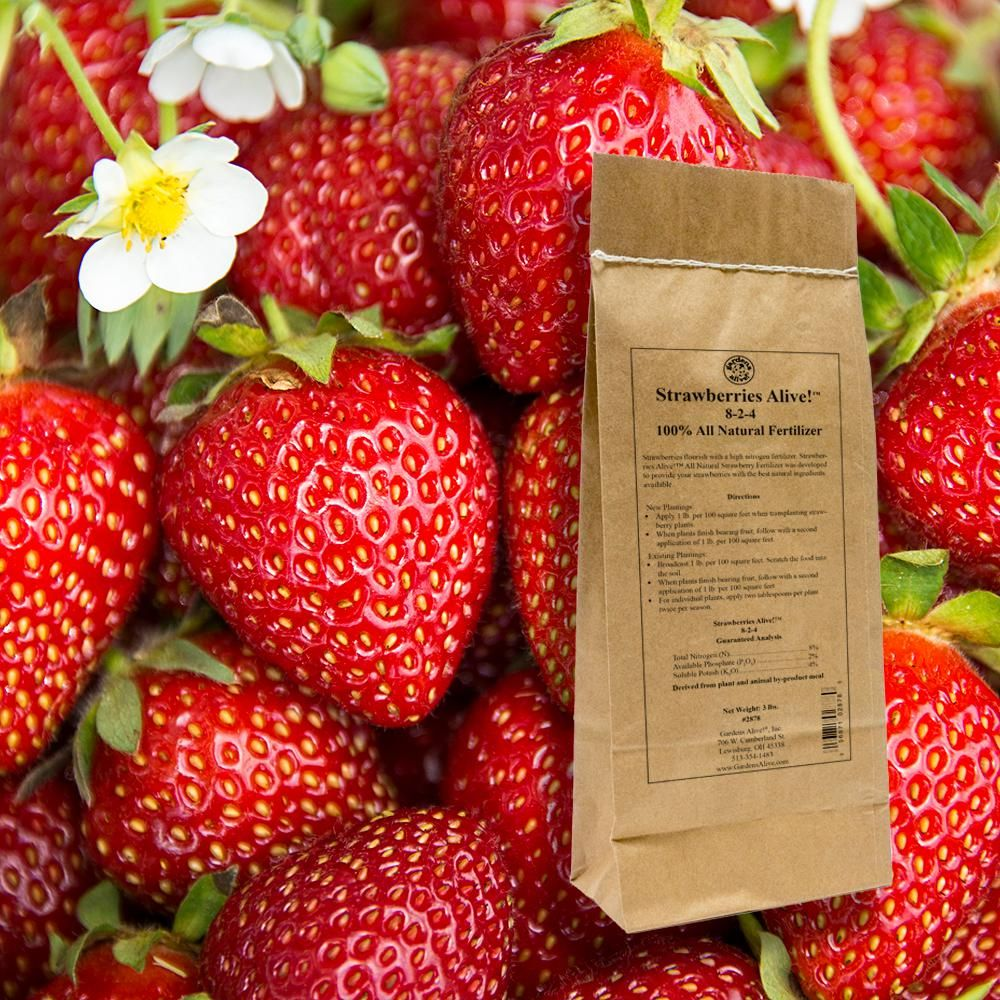 Gardens alive 3 lbs strawberries alive fertilizer2878