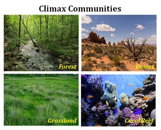 What is climax community ecology pinterest ecological succession describe the process of succession in an ecosystem characteristics of climax publicscrutiny Choice Image