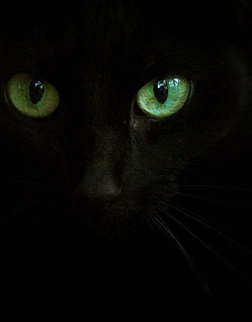 eyes of #emerald #green