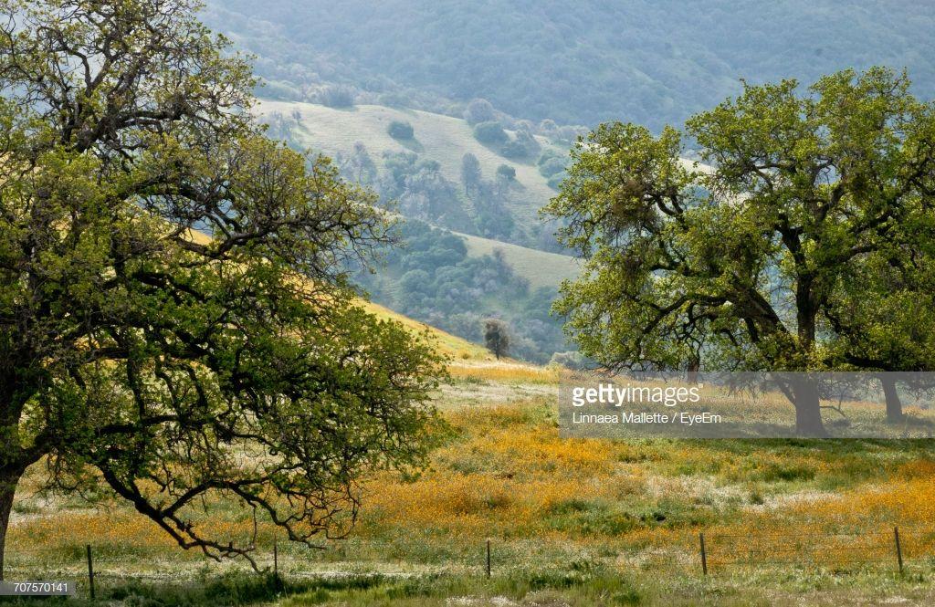 Trees On Landscape Against Sky Landscape Mountain Landscape Stock Photos