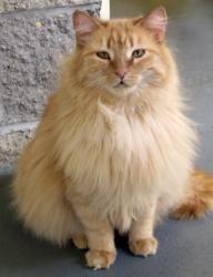 Adopt Apricot On Petfinder Cat Adoption Super Cute Animals Animals
