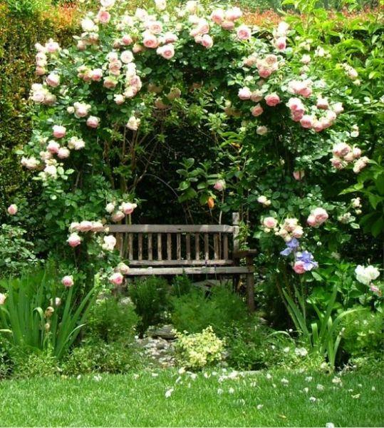 Climbing rose Eden | into the garden | Jardins, Jardin feng ...