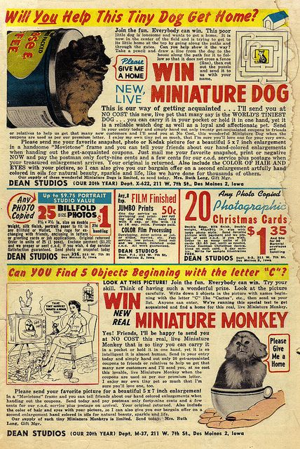 Image result for Live Miniature Dog at No Cost comic ad