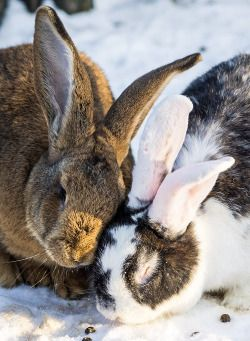 "funkysafari: ""Bunny cuddles by Eleleleven """