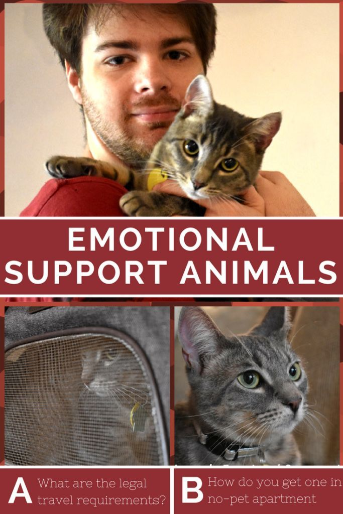 What is an Emotional Support Animal and what do they need