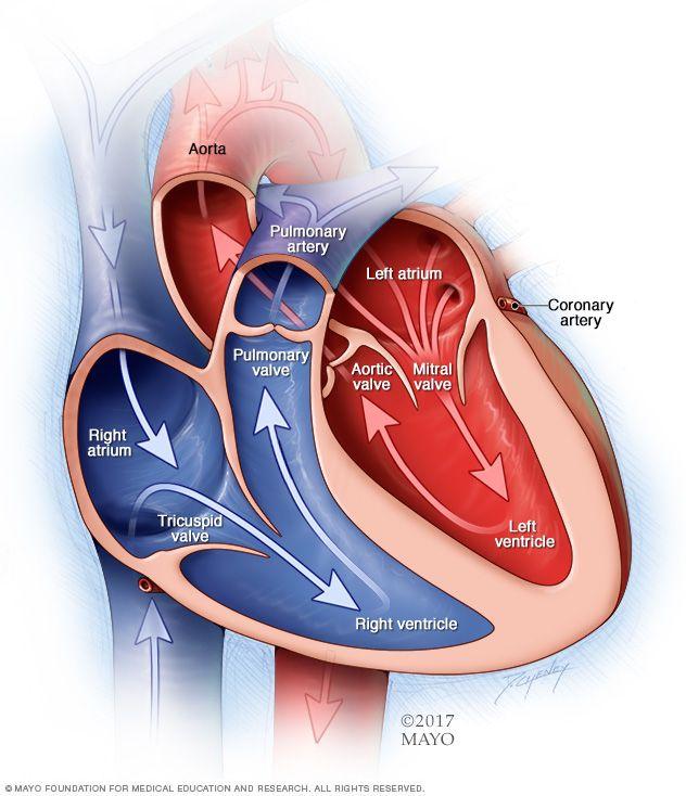 HIPERTENSION PULMONAR NIÑOS  DEFINICION  Hipertension Pulmonar Argentina