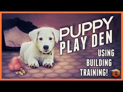 114 Puppy Training The Puppy Play Den Youtube Puppy Play