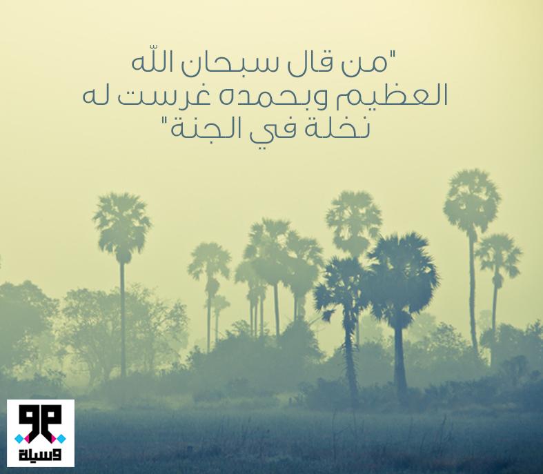 من قال سبحان الله العظيم وبحمده غرست له نخلة في الجنة Palm Trees Tree Palm