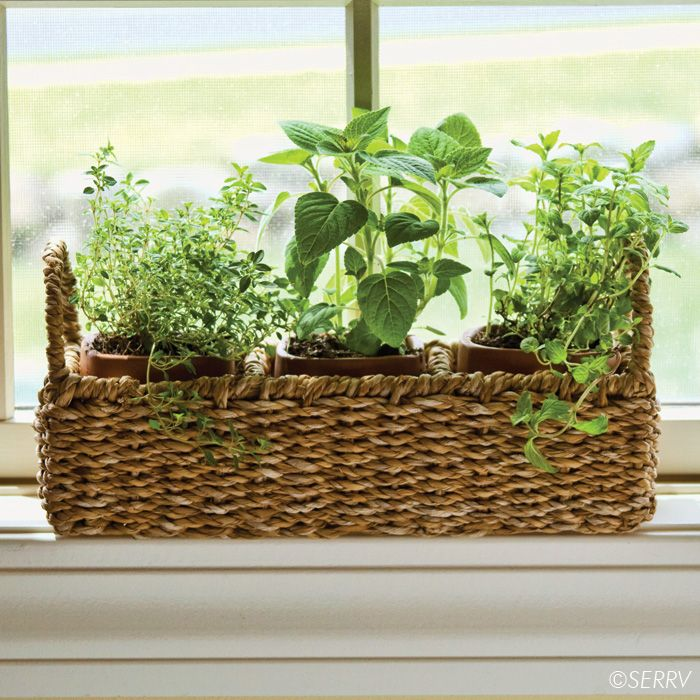 Marvelous Indoor Window Sill Herb Planter Part - 5: Windowsill Herb Planter Three Terracotta Pots Nest Within A Wire-framed  Hogla Basket With Handles