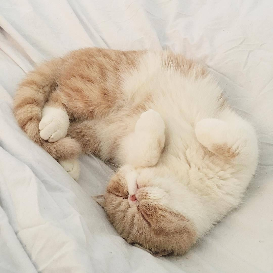 Vhsmiel With Images Cat Aesthetic Beautiful Cats Pretty Cats