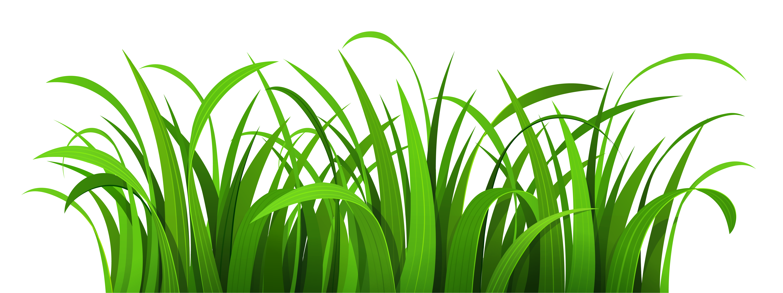 grass clipart Grass clipart, Grass wallpaper, Grass patch