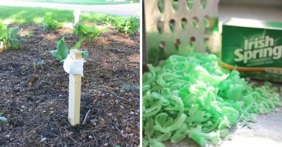 12 Uses For Irish Spring Soap Besides Showering Irish