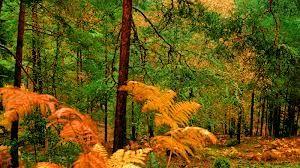 Predominan los árboles como las hayas, los robles, los álamos y los castaños. Entre ellos crecen distintos arbustos, como la zarza y plantas herbáceas.Los árboles crecen muy bien en primavera y en verano, cuando tanto la humedad como la temperatura son adecuadas